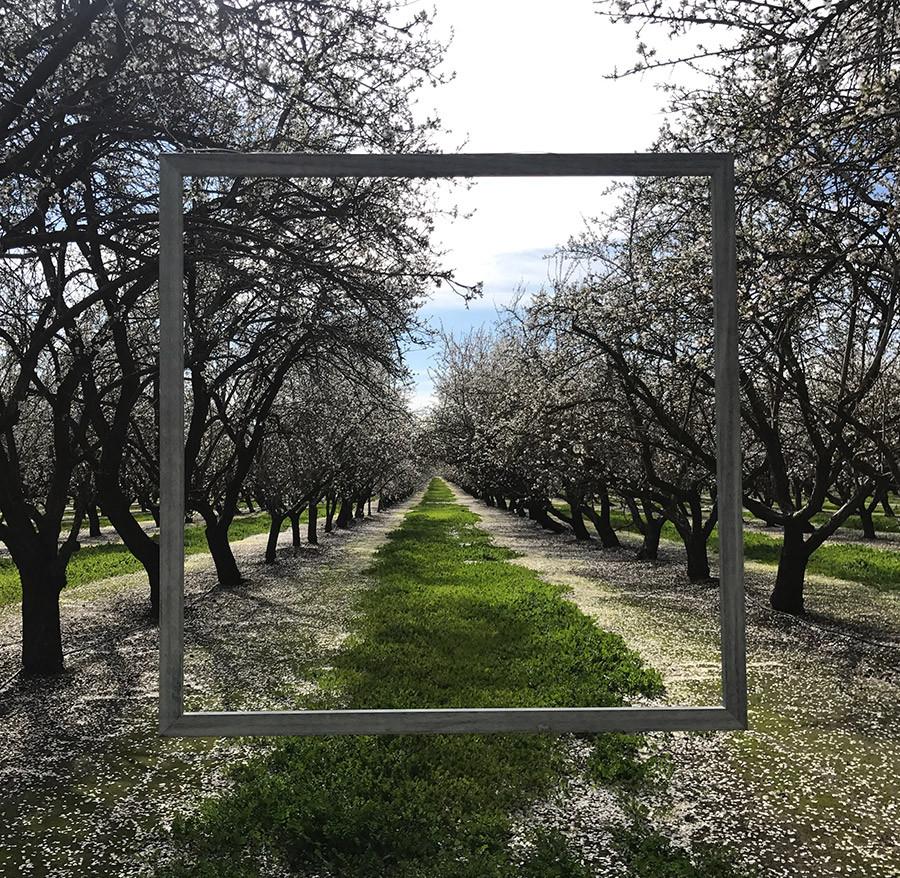 OrchardTourSquare-frame.jpg
