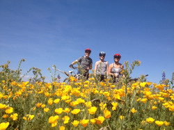 California poppies take over!