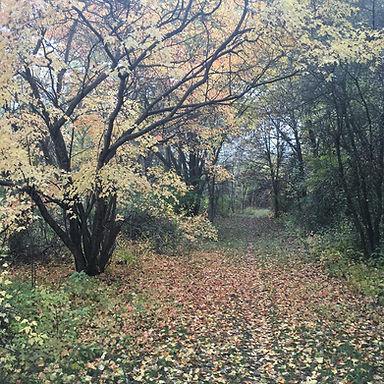 Fall Walk 2019.jpg