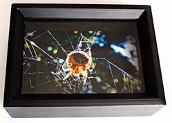 Shadowbox Spider