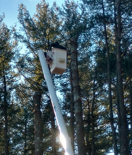 Tree service near me in the Farmington Valley CT and Avon CT bucket truck with man doing tree work