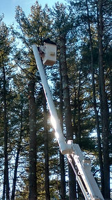 Tree Service Farmington CT tree being cut down from bucket truck
