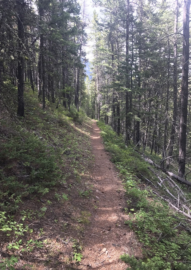Corral Creek Trail.jpg