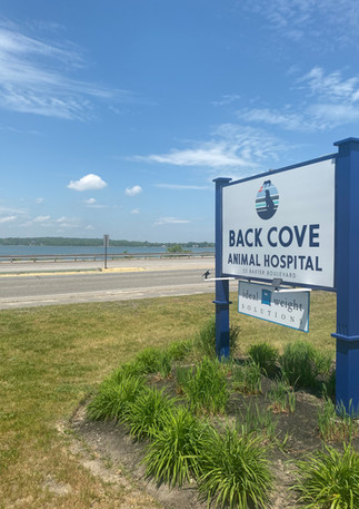 Back Cove Veterinary Clinic Portland Sig