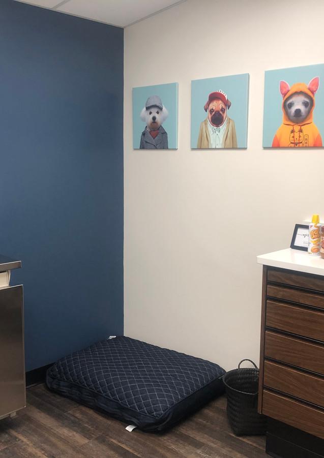 Small dog room