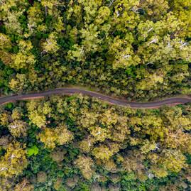 The Otways - Great Ocean Road