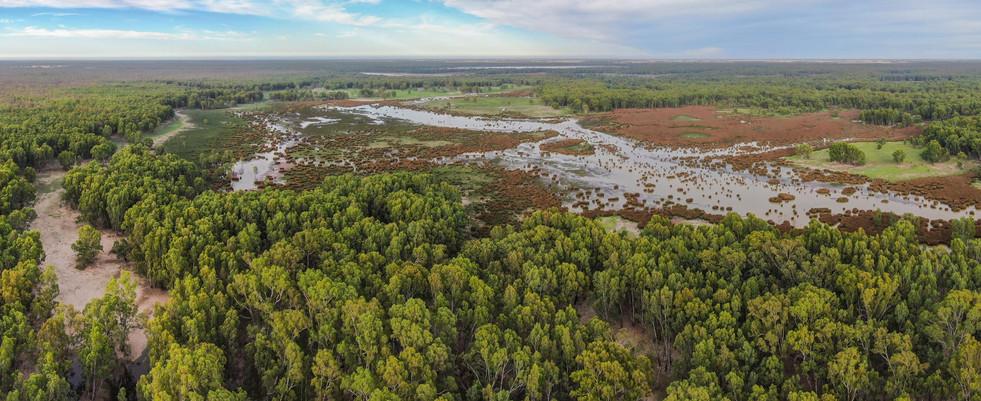 Murray River 2- Barmah National Park