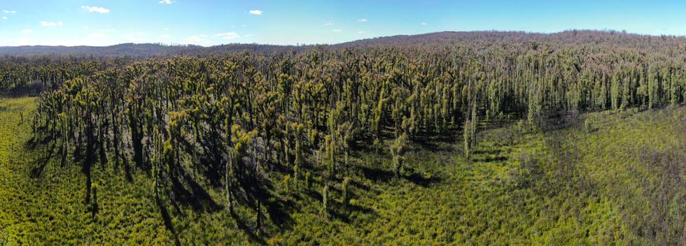 East Victoria bushfire recovery 4