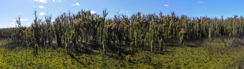 East Victoria bushfire recovery 3