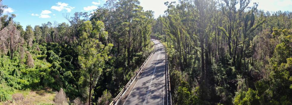 East Victoria bushfire recovery 2