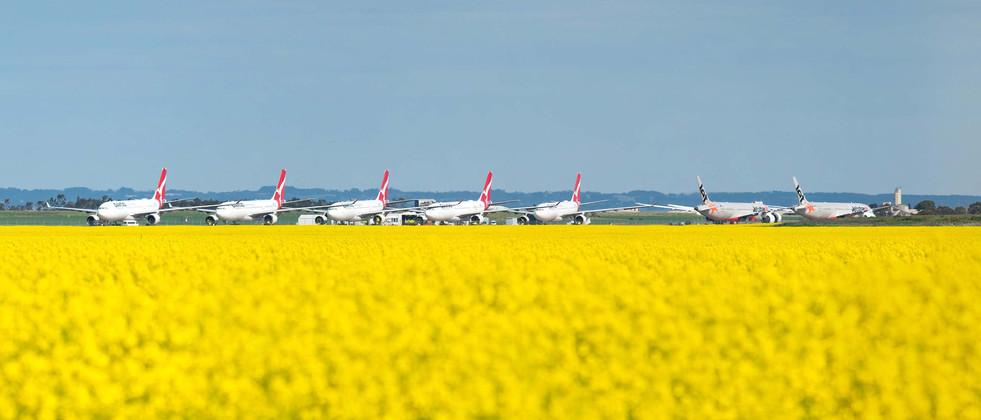 Avalon Airport Canola 2