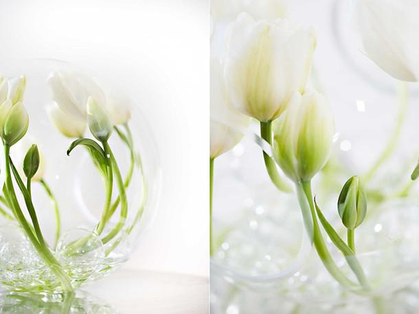 professional-web-photography.jpg