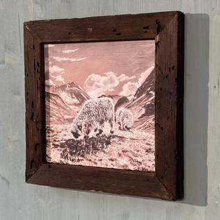 Bildnr. KD-027 Schwarznasenschafe mit Rahmen antik