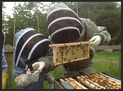 The Broomley Bees start to draw out the wax foyndation