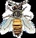 bee clean.png