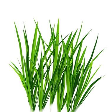 GRASS%20PNG%20FREE_edited.png