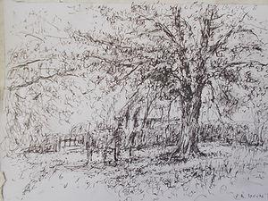 The Lime Tree at Cockington, Devon
