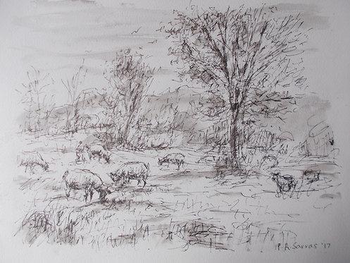 Sheep Grazing at Cockington