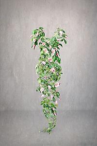 Rose - Missing Series