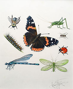 Insect Book Jacket