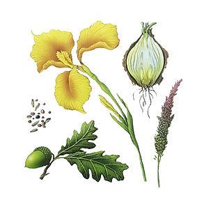 Plants Book Jacket