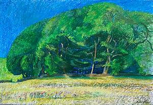Trees on Dartmoor