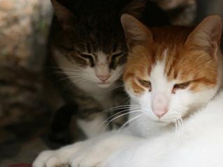 Escolhendo um gatinho - Parte 2