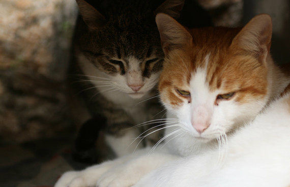 Los gatos de abrazo