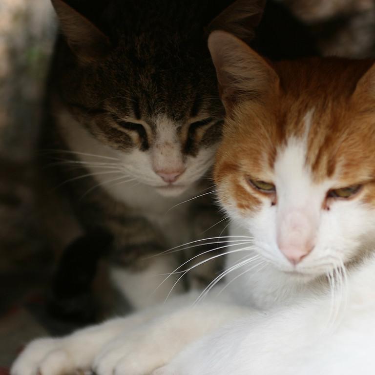 Webinário - Agressividade em Gatos. Inscreva-se aqui: https://bit.ly/3n9nOkJ
