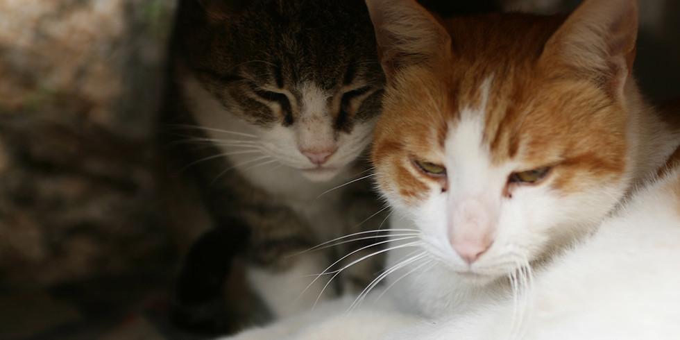 Webinário - Agressividade em Gatos: identificando e trabalhando ações de manejo