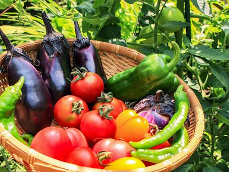 家庭菜園🌱夢は「てといろファーム」です!