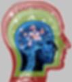 3rd brain.png