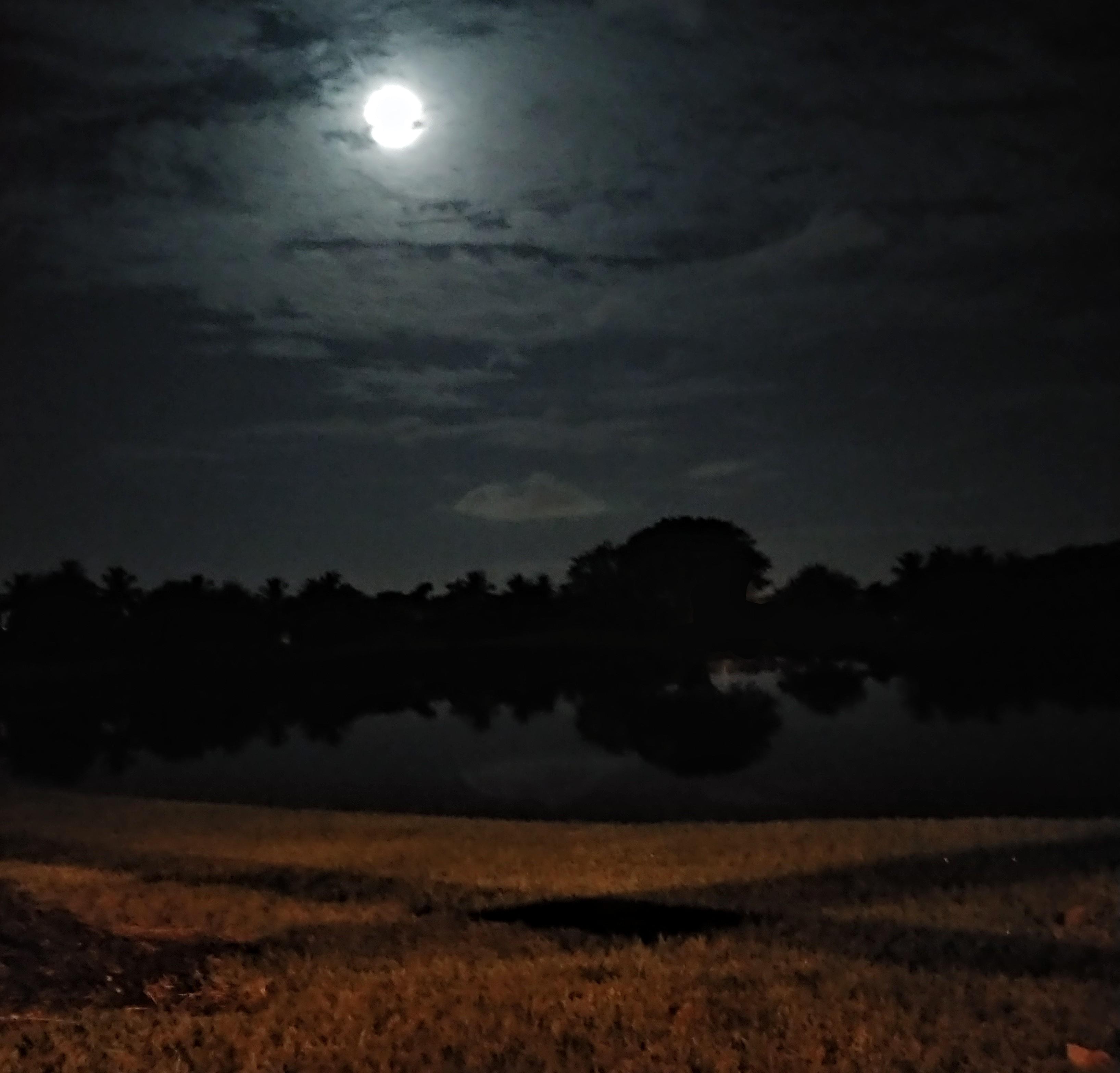 wiesenthal_elias.night3