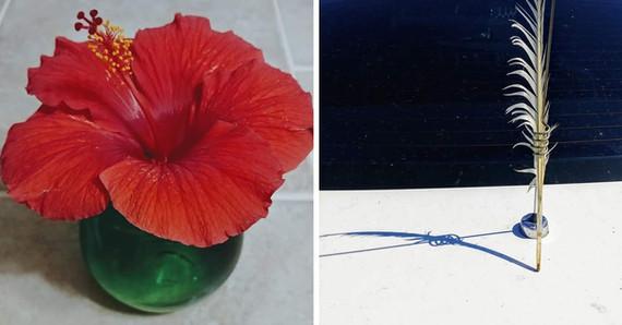 hibiscus/feather
