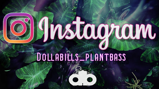 plant bass1.jpg