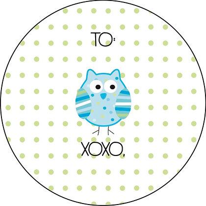 owl turq