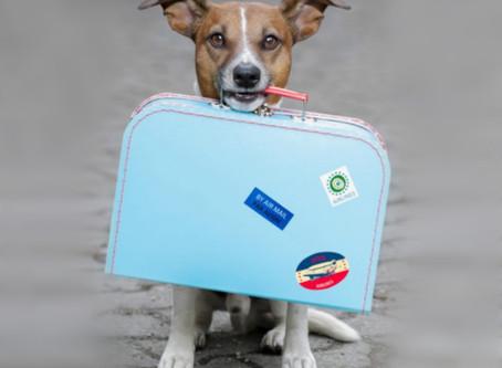 """K9 Sensei's """"Camp K9"""" Dog Boarding Packing Tips"""