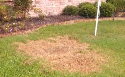 We Solve Lawn Problems