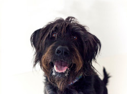 Meet Enzo