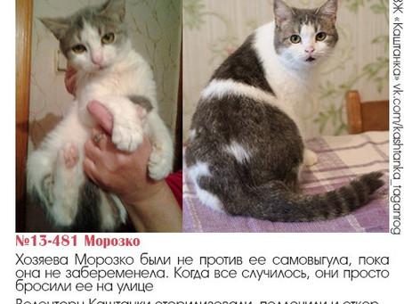 Приём кошек на реабилитацию