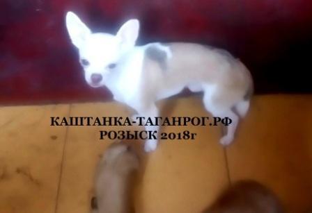 ТАГАНРОГ Розыск собаки 2018г