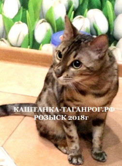 ТАГАНРОГ Розыск кошки 2018г