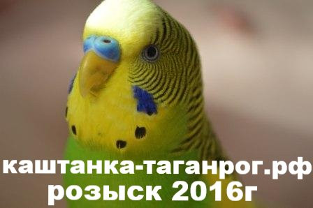 ТАГАНРОГ Розыск попугая 2016г