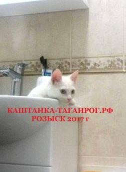 ТАГАНРОГ  Розыск кошки 2017г.