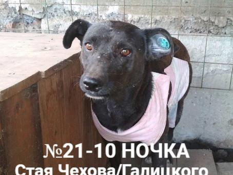 ЗАКРЫТ Сбор №12 Компенсация оплаты стерилизации собаки №21-10 НОЧКА