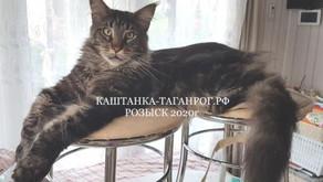 ТАГАНРОГ Розыск кота 2020г