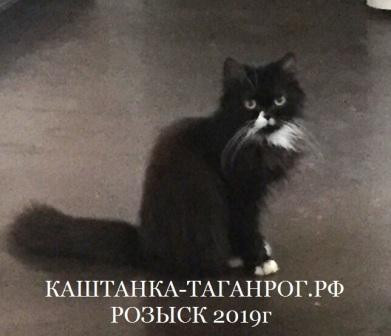 ТАГАНРОГ Розыск кошки 2019г