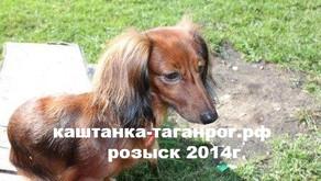 Собака из Москвы потеряна в Таганроге  Розыск собаки 2014г