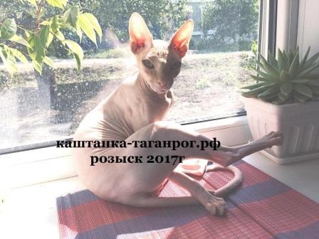 ТАГАНРОГ Розыск кота 2017г.