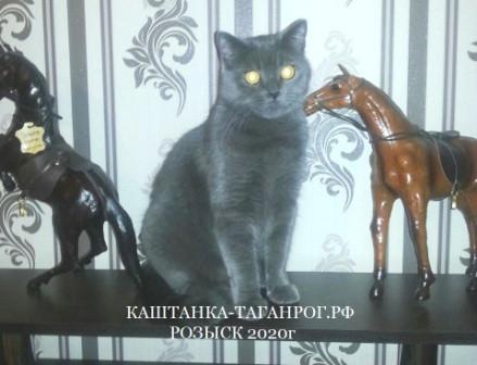 ТАГАНРОГ Розыск кошки 2020г